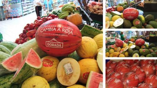 Melones en fibra-Dorada